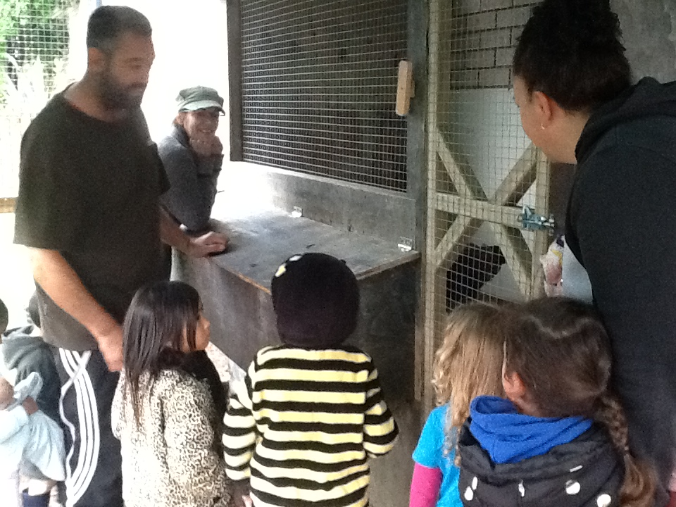 Discussing where the chickens will live, sleep and lay their eggs.