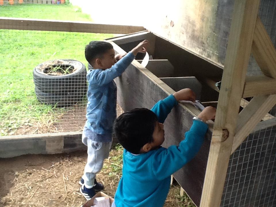 Making sure that each nesting box has enough shredded newspaper.