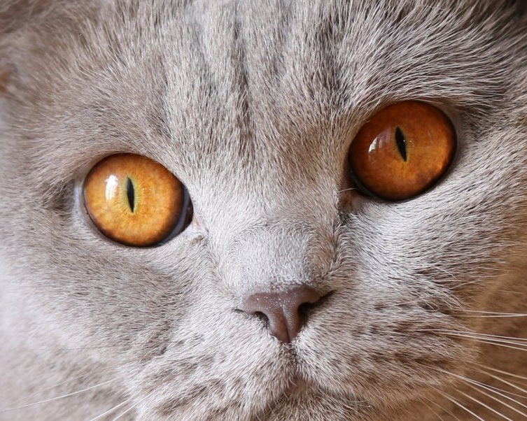 cat-eyes-pet-portrait.jpg