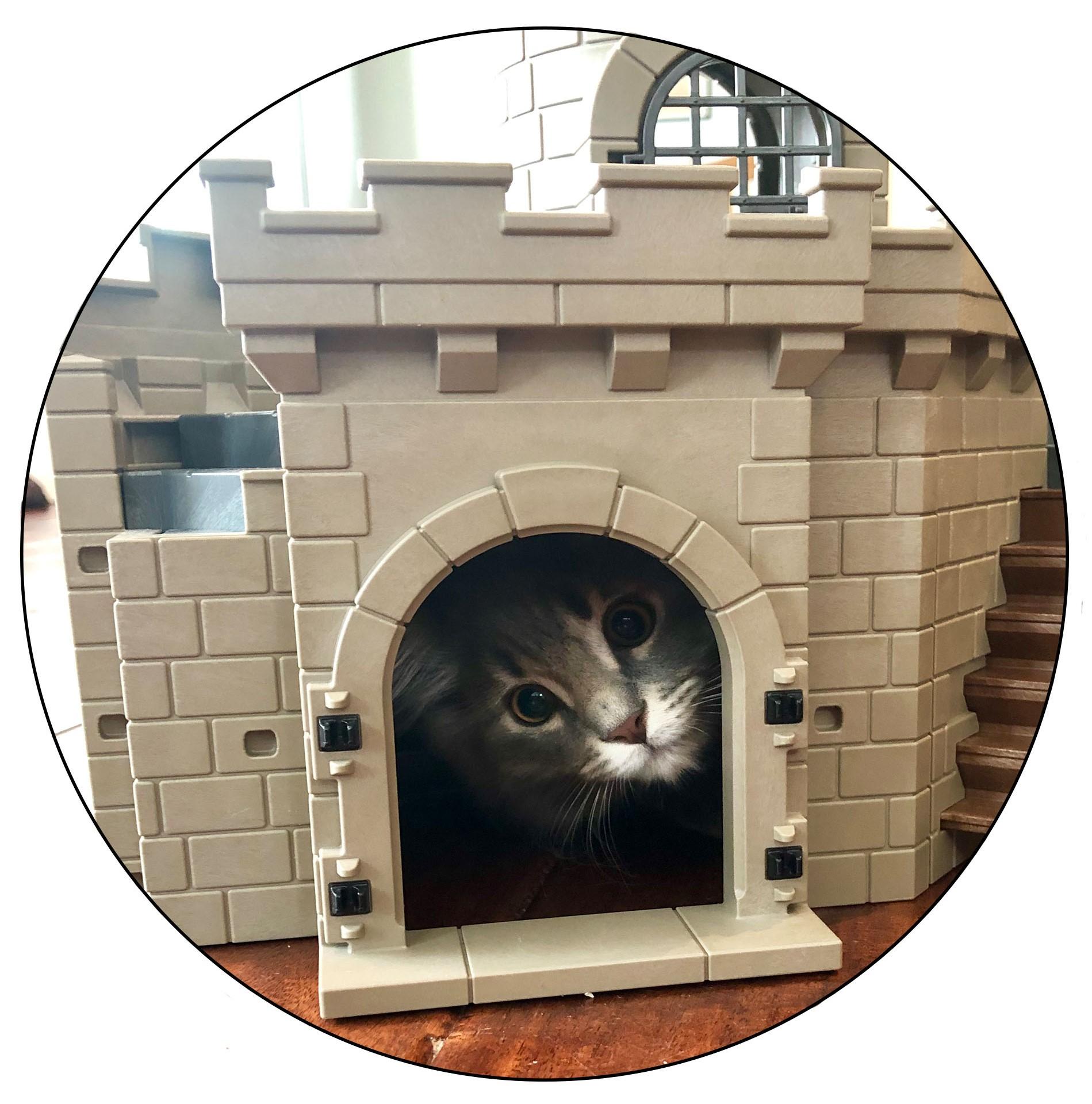 Cat Castle.jpg