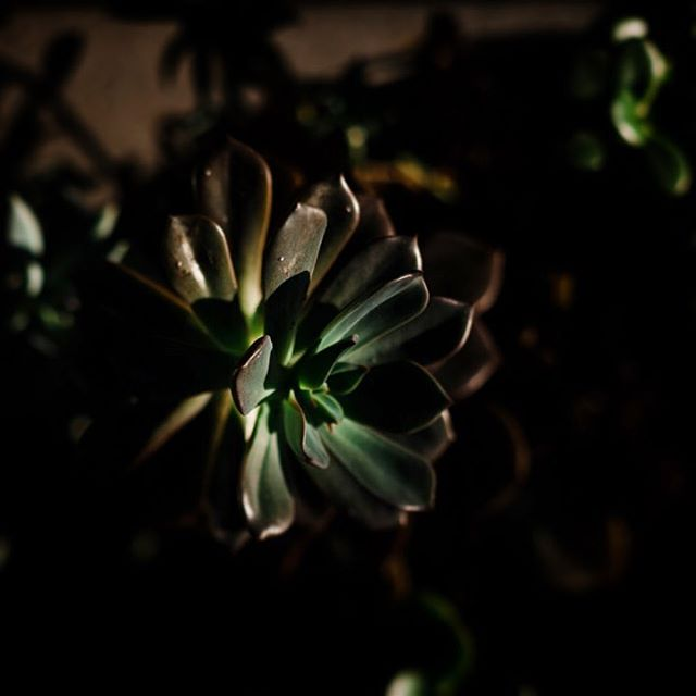 Thursday || Sloth like day, staring at succulents in pretty light while nursing a cold.