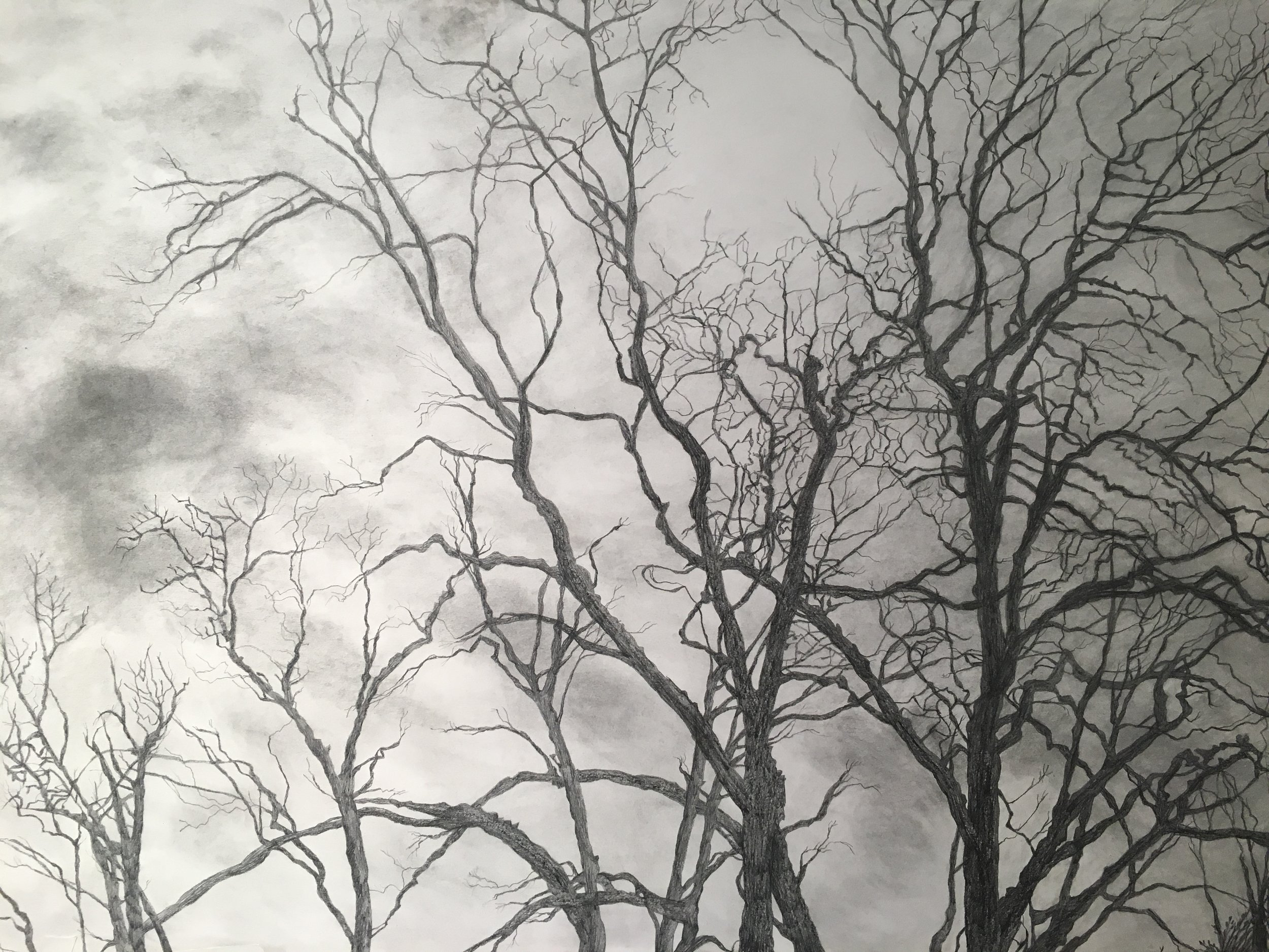 Trees I, 2019, graphite on paper, 44 x 27 in, $3,700