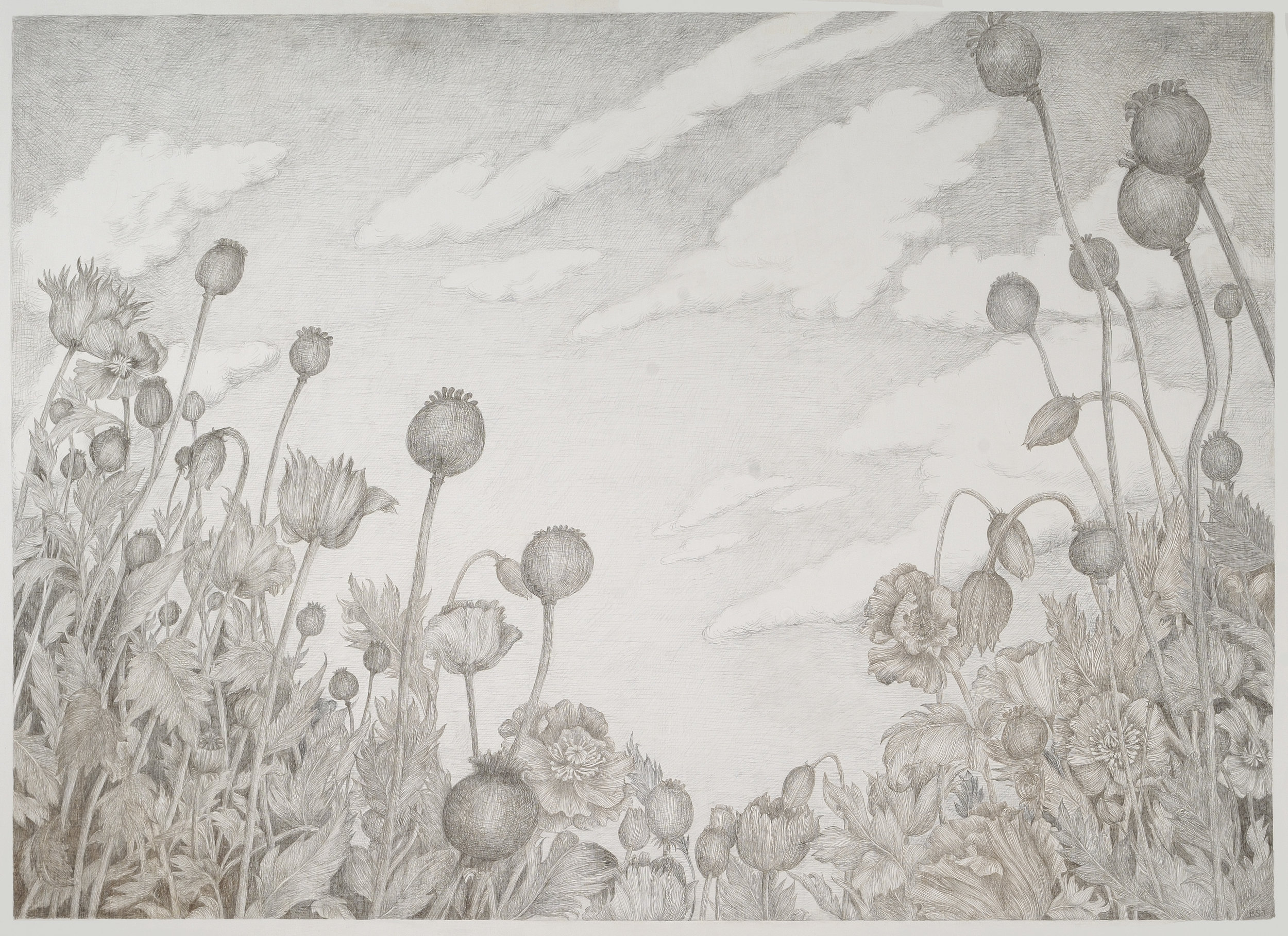 Poppies, 2014, silverpoint on paper, 27 x 30 in, $3,500