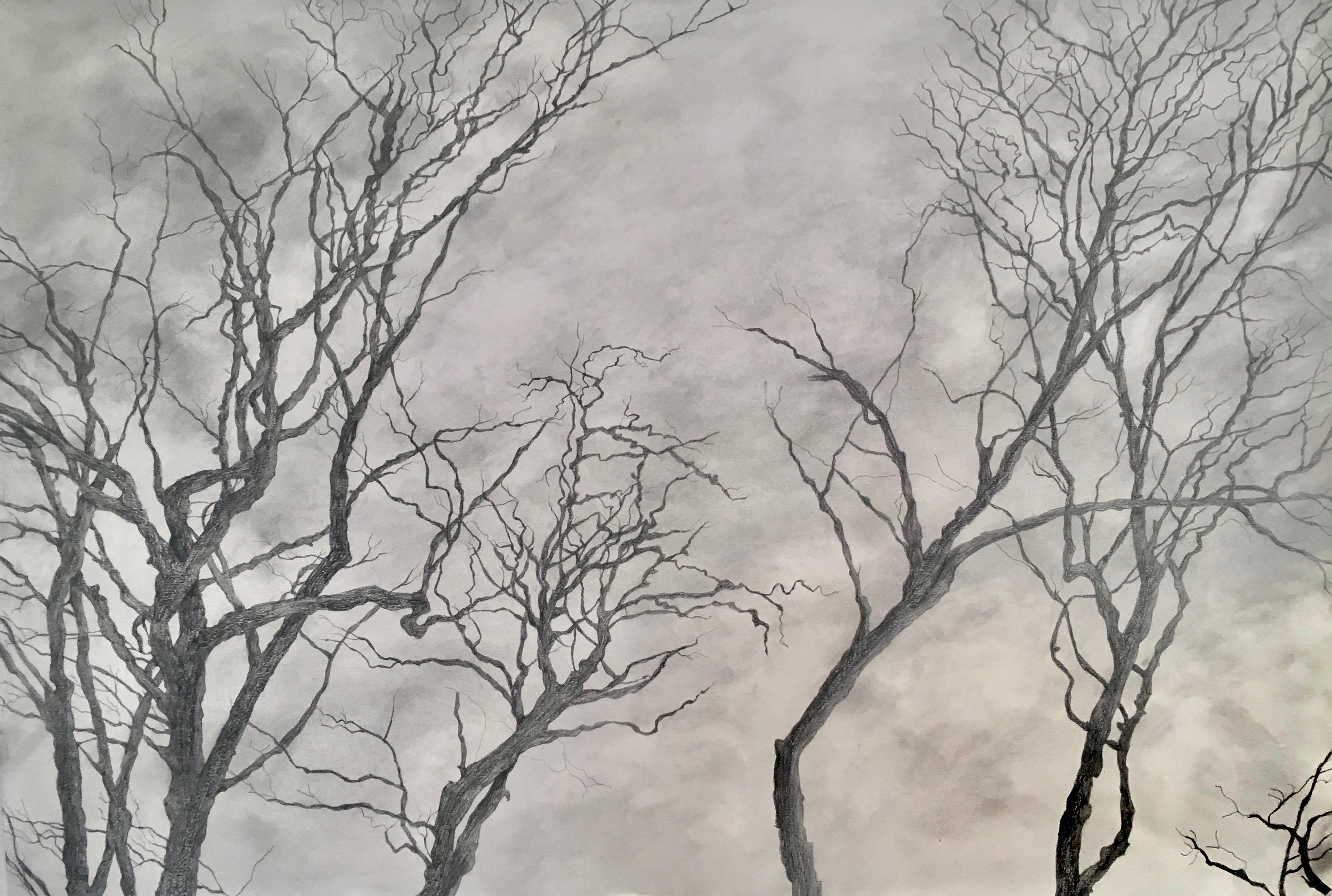 Trees II, 2019, graphite on paper, 44 x 27 in, $3,700