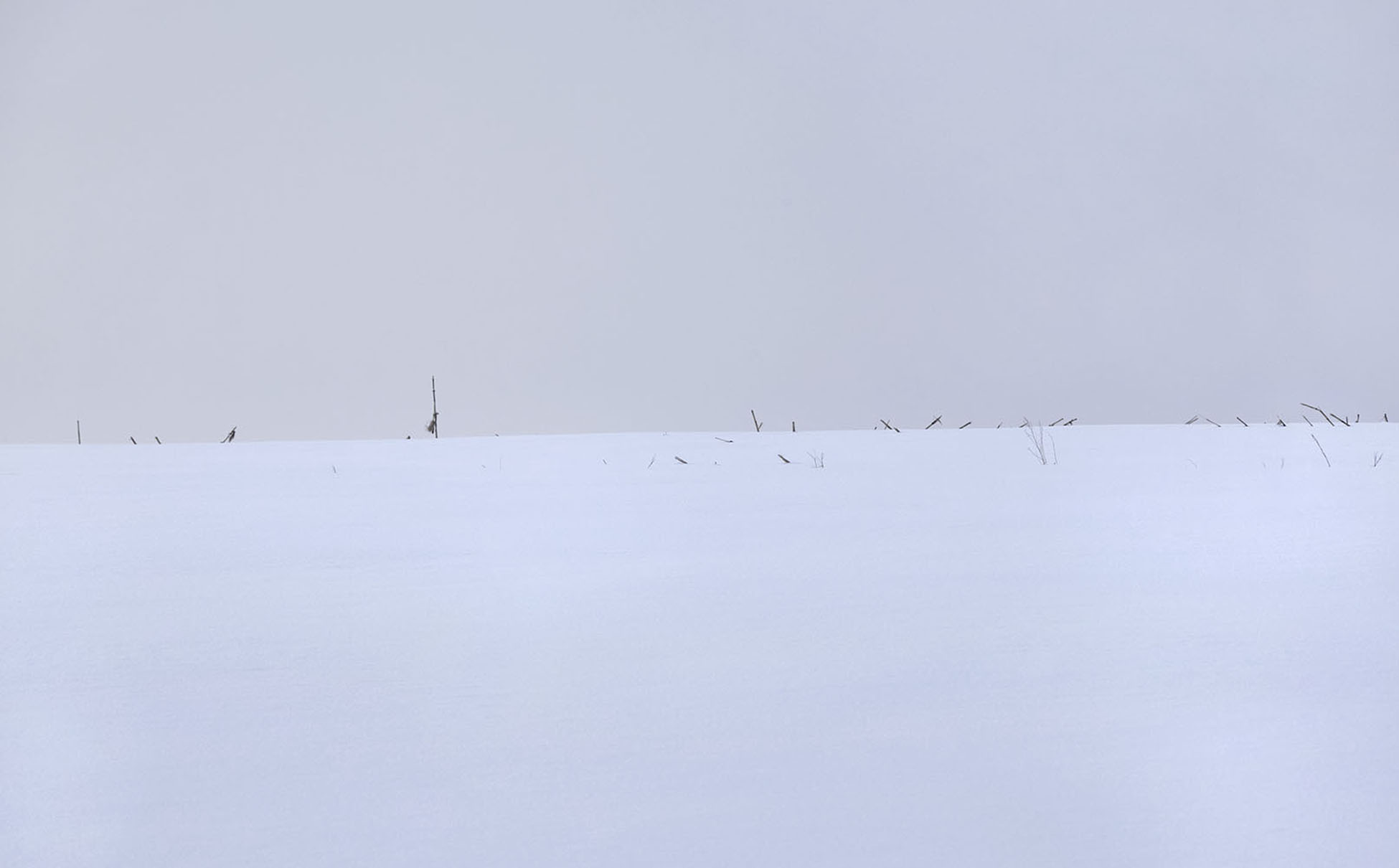 Light Frost #0456, 2014, archival pigment print on photo rag paper, 30 x 20 in, $1,800; 40 x 27 in, $2,600