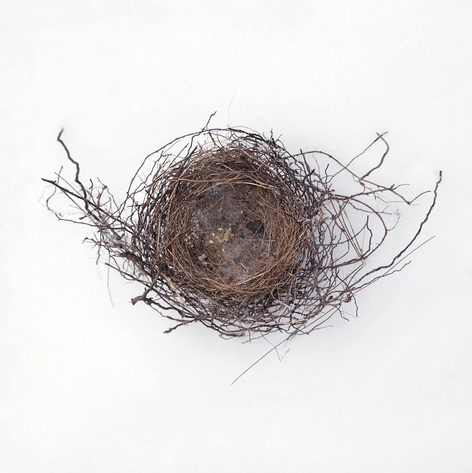 Nest #1750, 2017, archival pigment print, 10 x 10 in, $950; 16 x 16 in, $1,500
