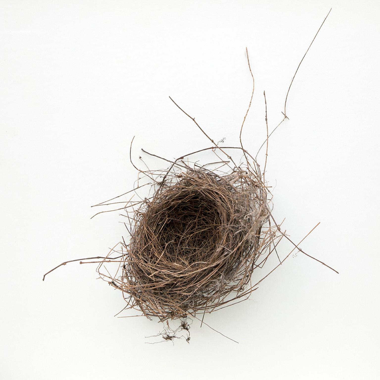 Nest #2475, 2017, archival pigment print, 10 x 10 in, $950; 16 x 16 in, $1,500