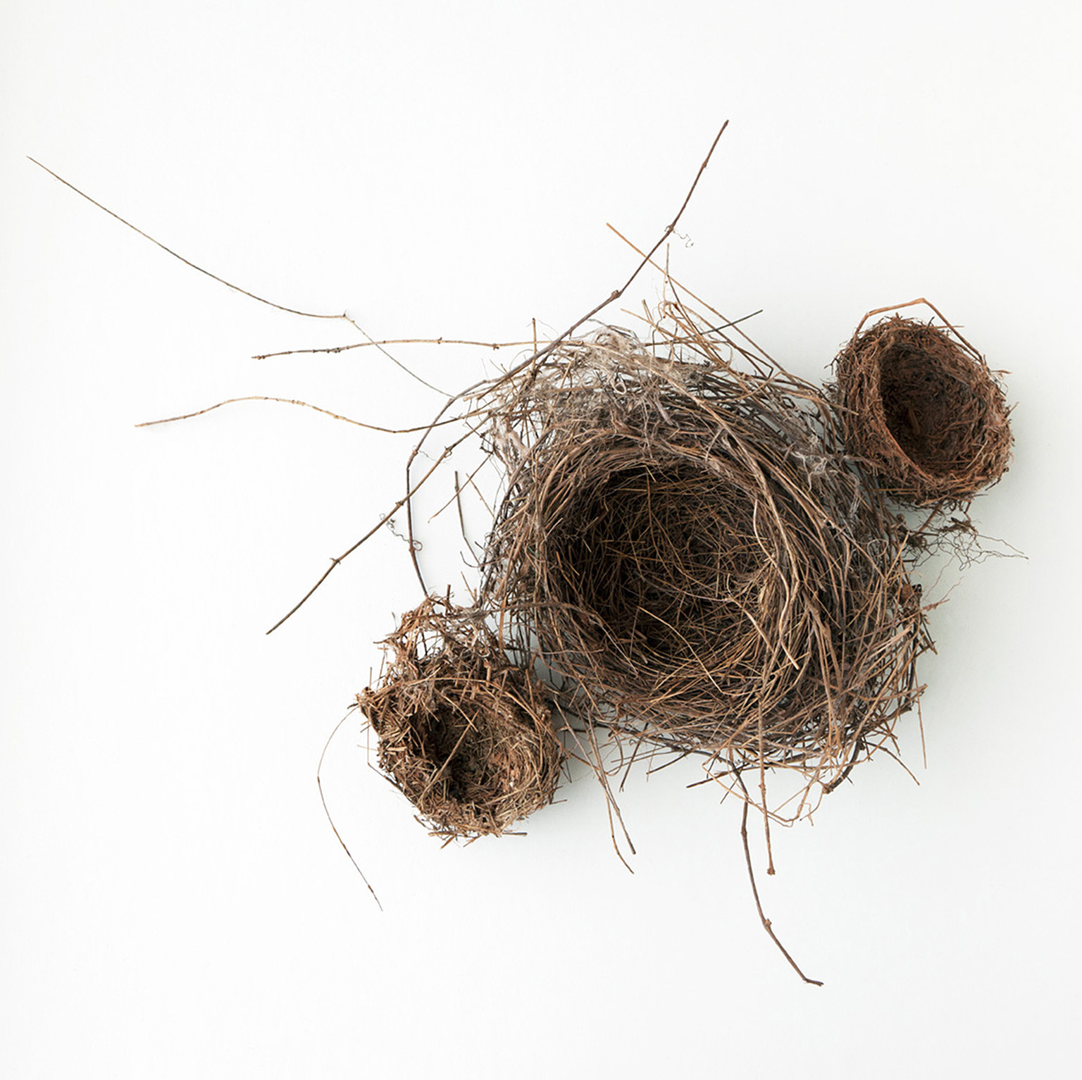 Nest #2461, 2017, archival pigment print, 10 x 10 in, $950; 16 x 16 in, $1,500