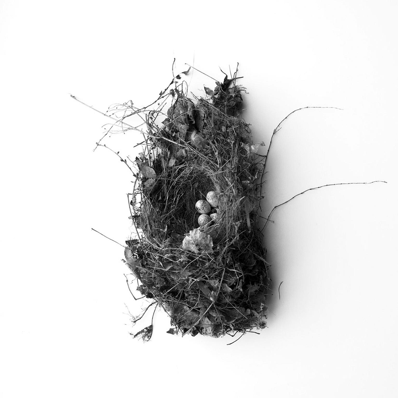 Nest #2625, 2017, archival pigment print, 10 x 10 in, $950; 16 x 16 in, $1,500