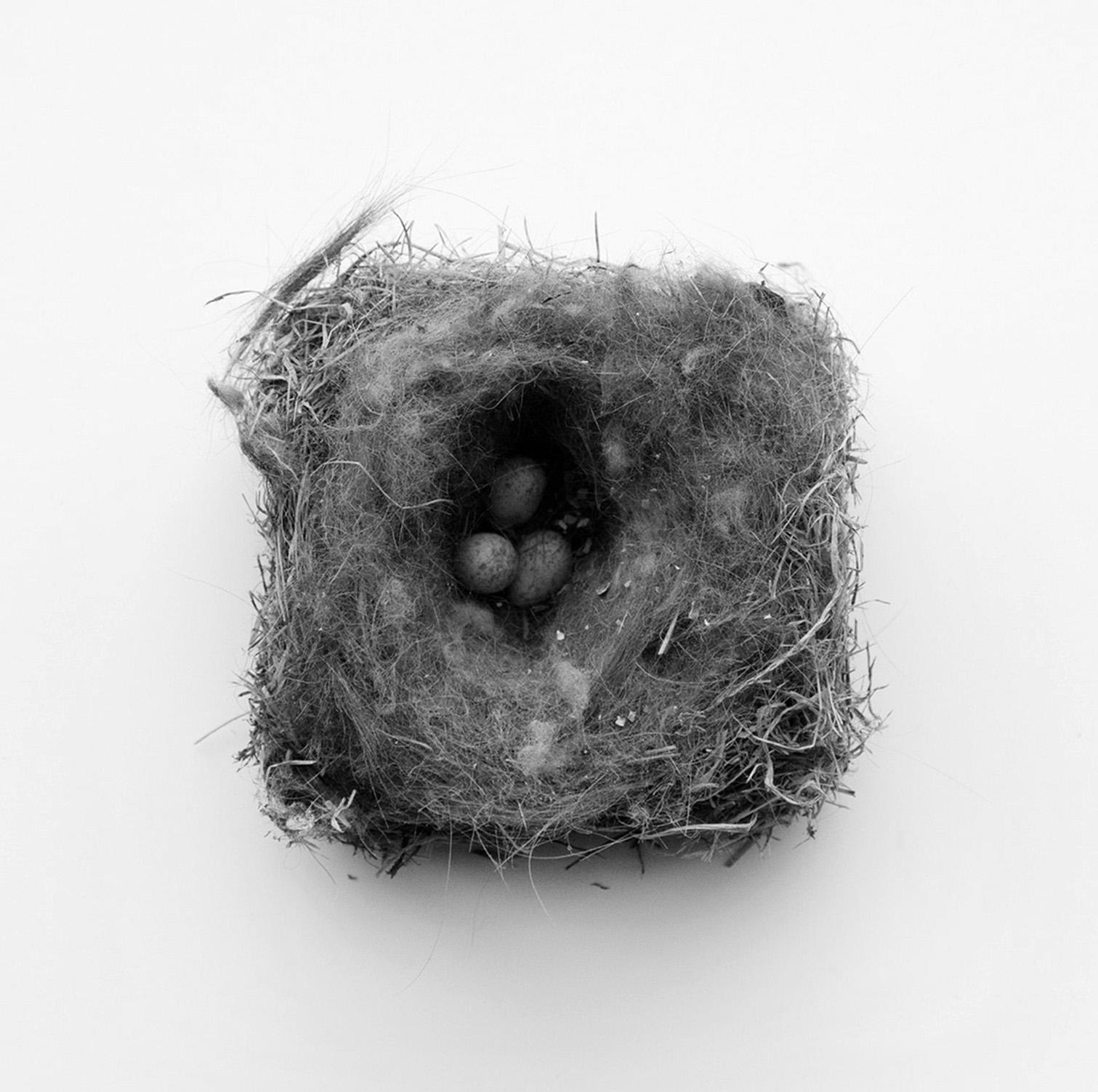 Nest #2654, 2017, archival pigment prints, 10 x 10 in, $950; 16 x 16 in, $1,500