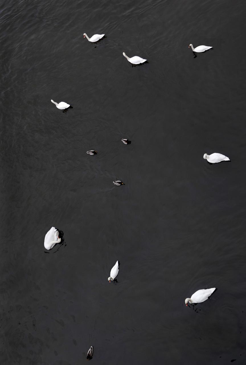 Swan #5302, 2017, archival pigment print on photo rag, 20 x 30 in, $1,800; 27 x 40 in, $2,600
