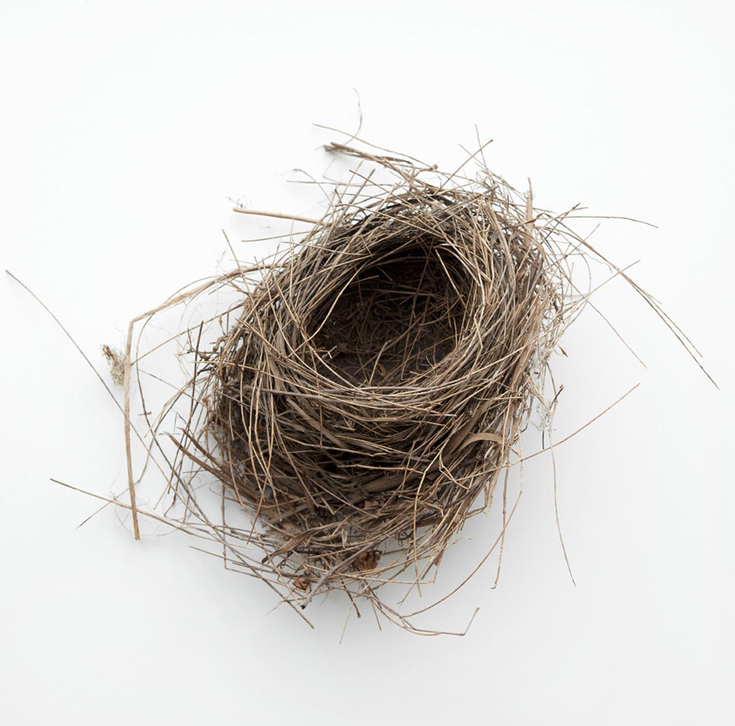 Nest #2569, 2017, archival pigment print, 10 x 10 in, $950; 16 x 16 in, $1,500