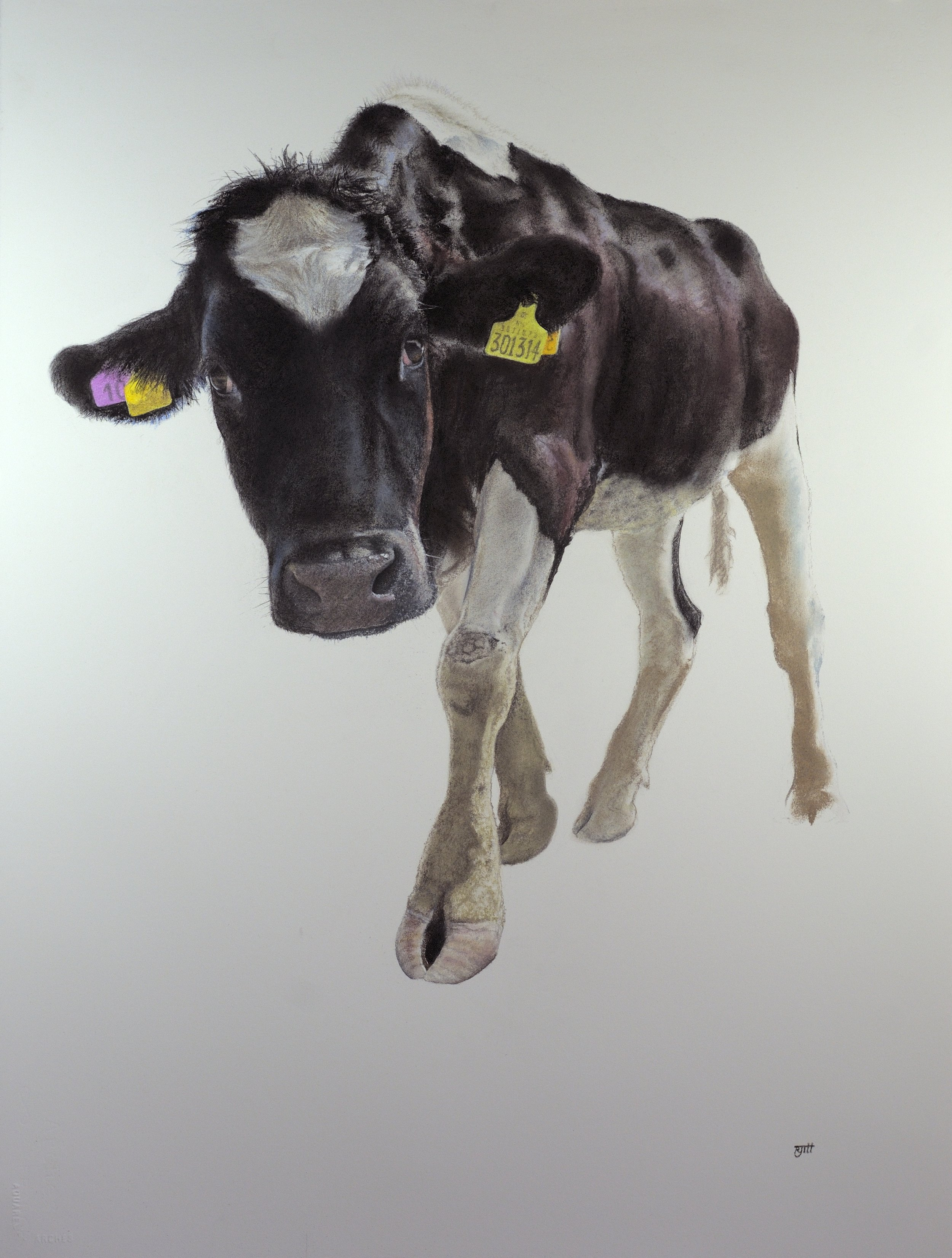 Moon Calf, 2018, pastel, 33 x 23 in, $4,000