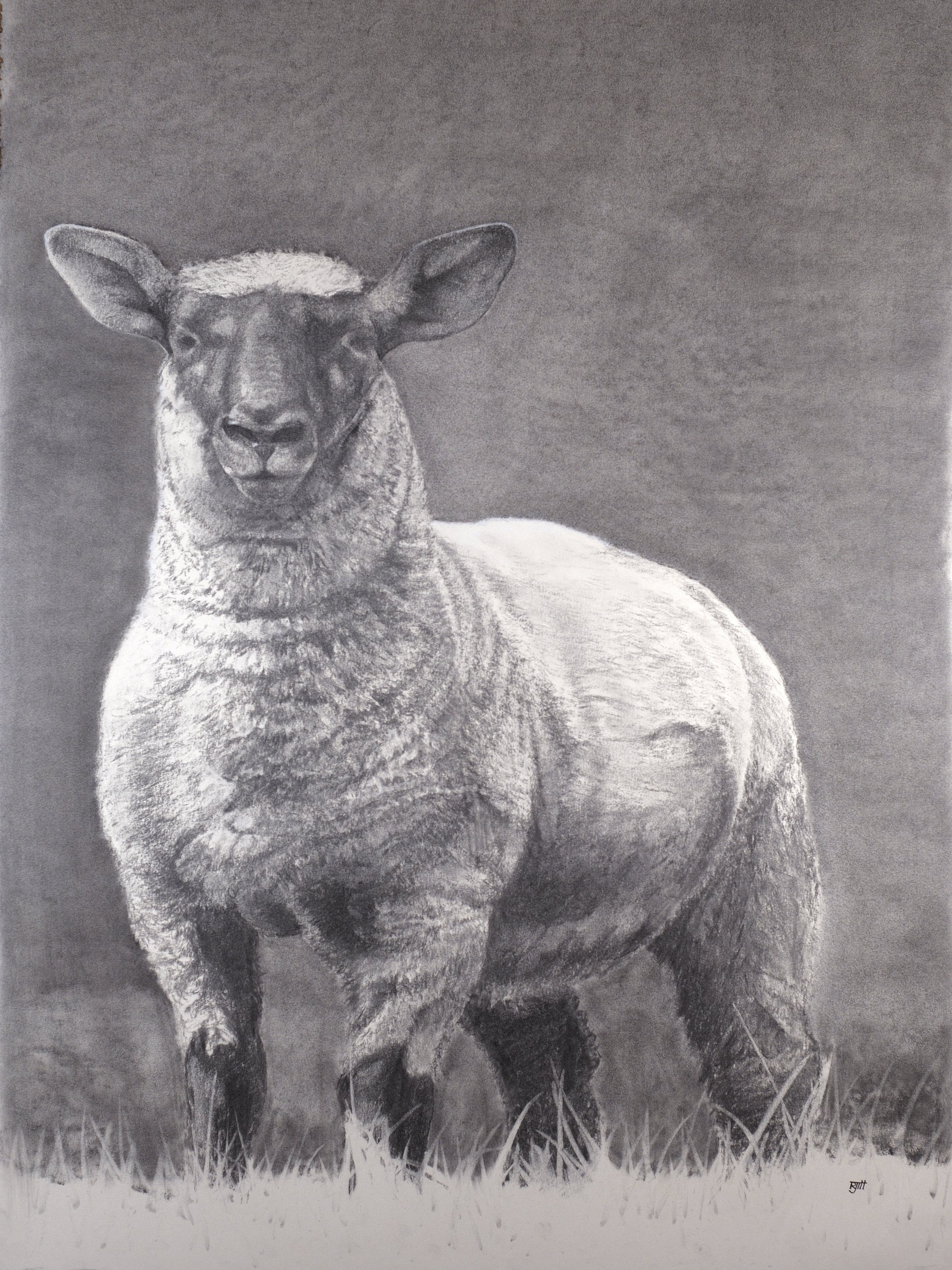 Untitled Sheep, 2018, charcoal, 30 x 22 in, $3,200