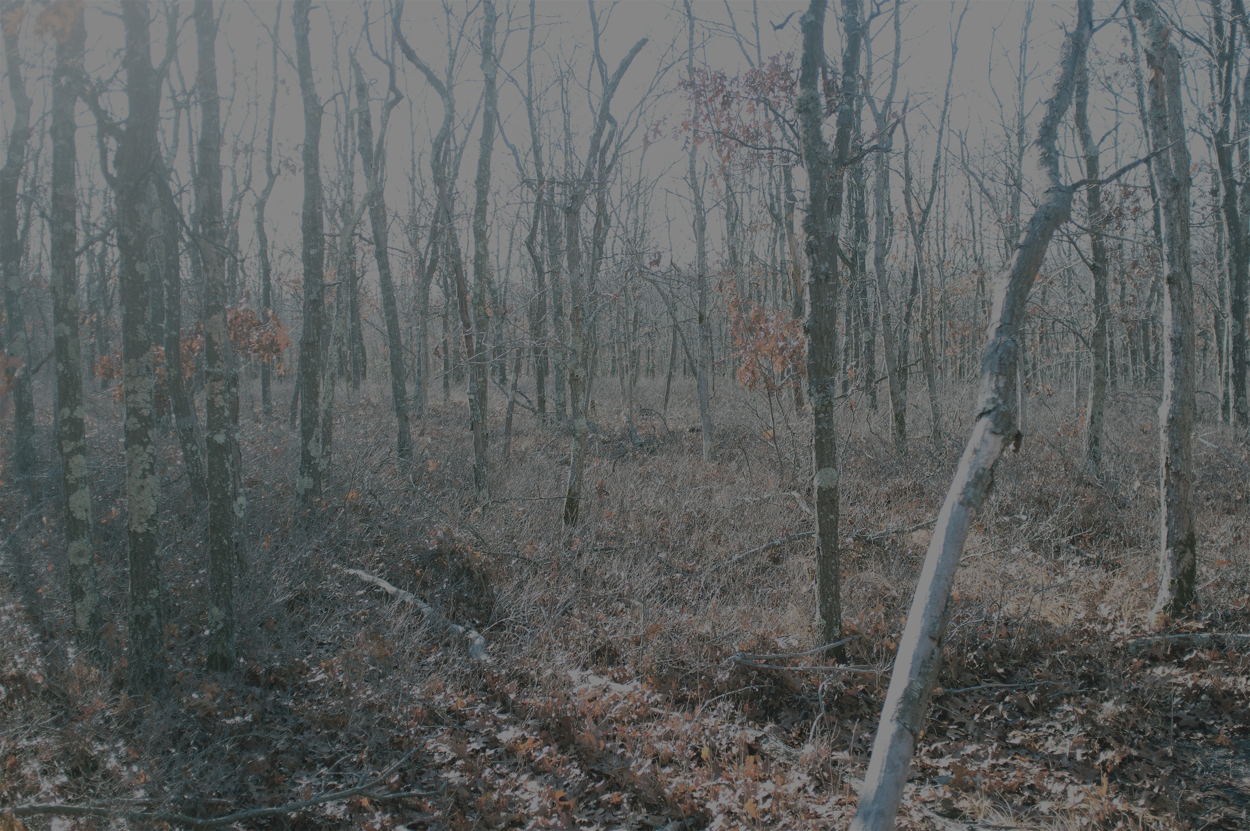 Sagg Trail Two, 2018, photo on aluminum, 65 x 43.3 in, edition of 5 (4 available), $5,000