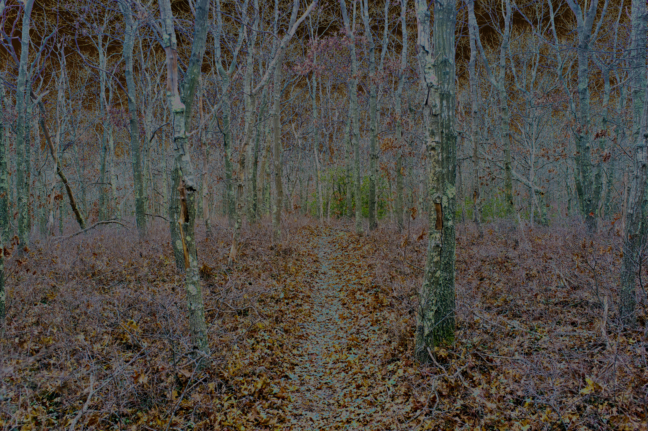 Sagg Trail One, 2018, photo on aluminum, 65 x 43.3 in, edition of 5 (3 available), $5,000