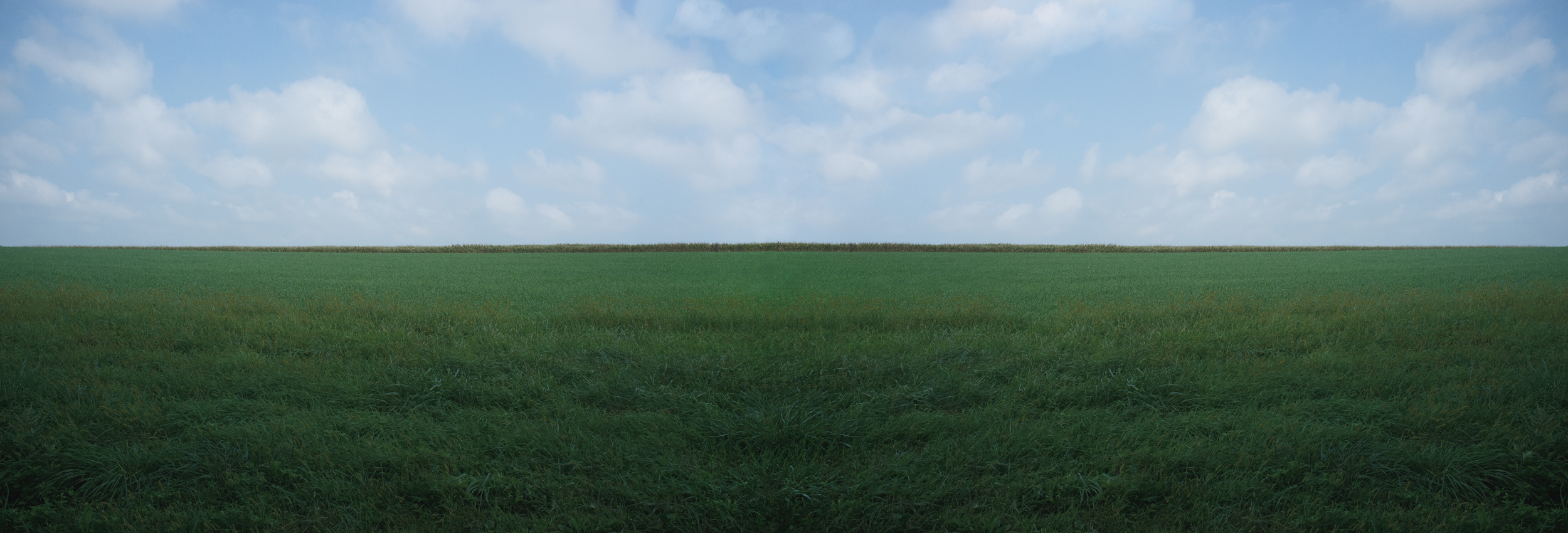 Water Mill Field, 2018, photo on aluminum, 72 x 23.75 in, edition of 5 (2 available), $5,000