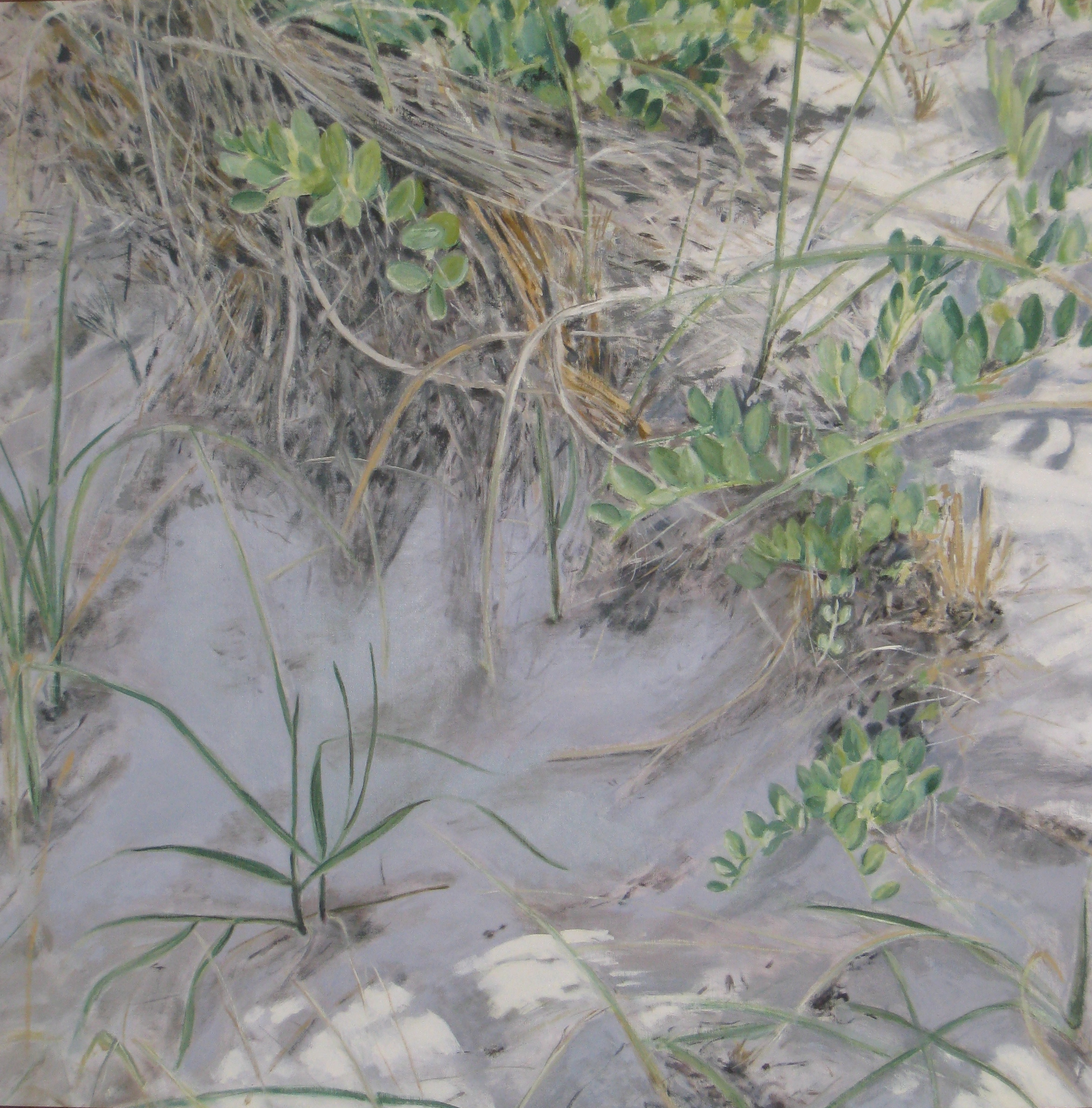 Dunes, 2007, oil, canvas, 48 x 48 in, SOLD