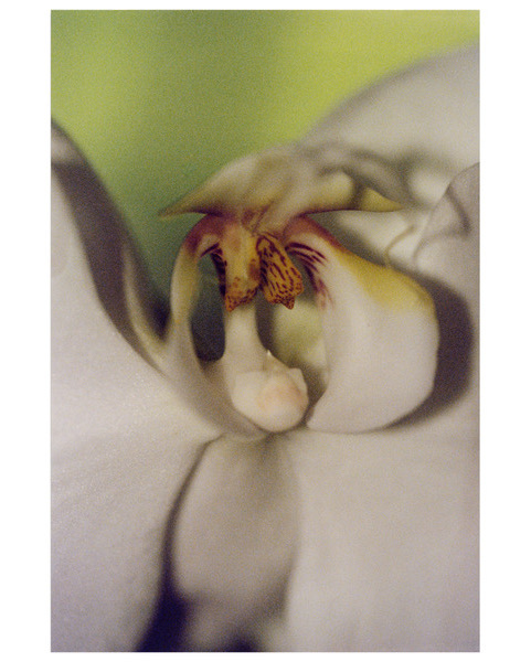 Orchid, 2014, photograph from negative film (can be printed in black and white), 16 x 20 in, $950 (other sizes available; priced accordingly
