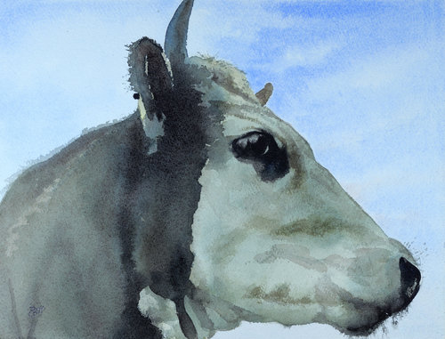 Thursday's Cow, 2016, watercolor, 10 x 14 in, $1,600