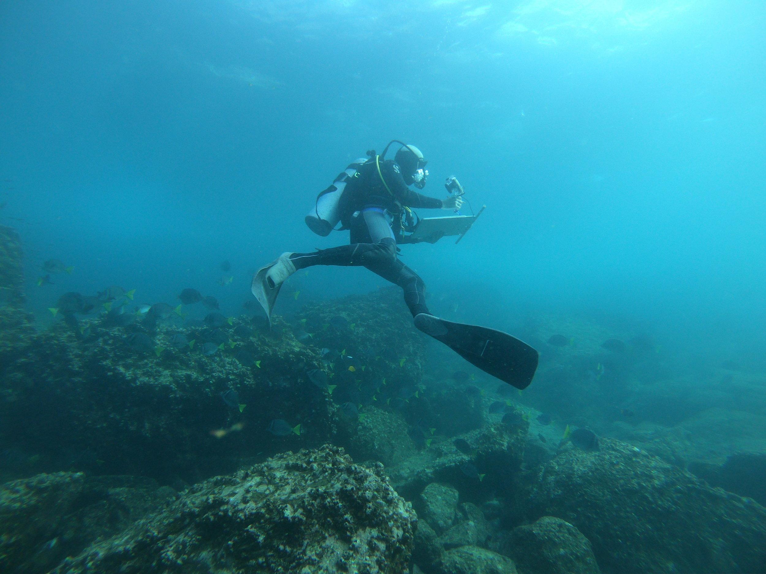 Figura 4 . Monitoreador caracterizando el sitio de buceo de Bajo Gardner, isla Española. Foto: Sofia Green/Fundación Charles Darwin