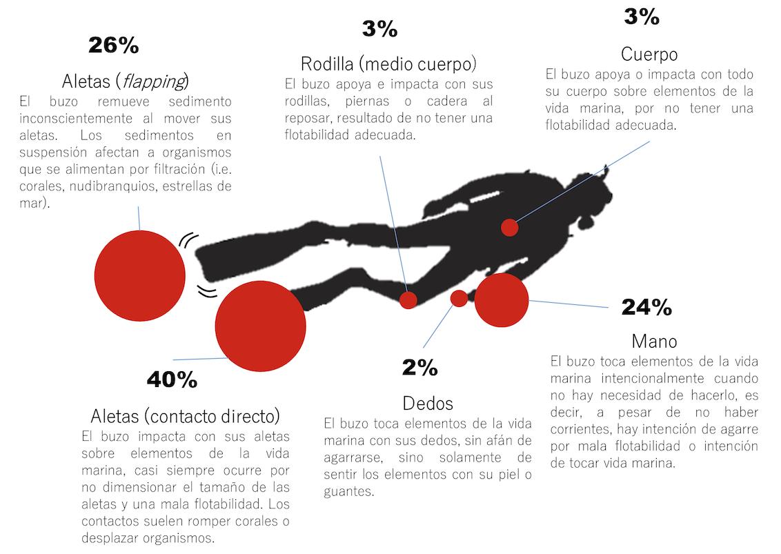 Figura 5 . ¿Con qué contactan los buzos sobre la vida y sustrato marino? Porcentajes con relación al número de contactos según parte del cuerpo y equipo del buzo. Fuente: Monitoreos submarinos del proyecto DiveStat.  Clic para agrandar.