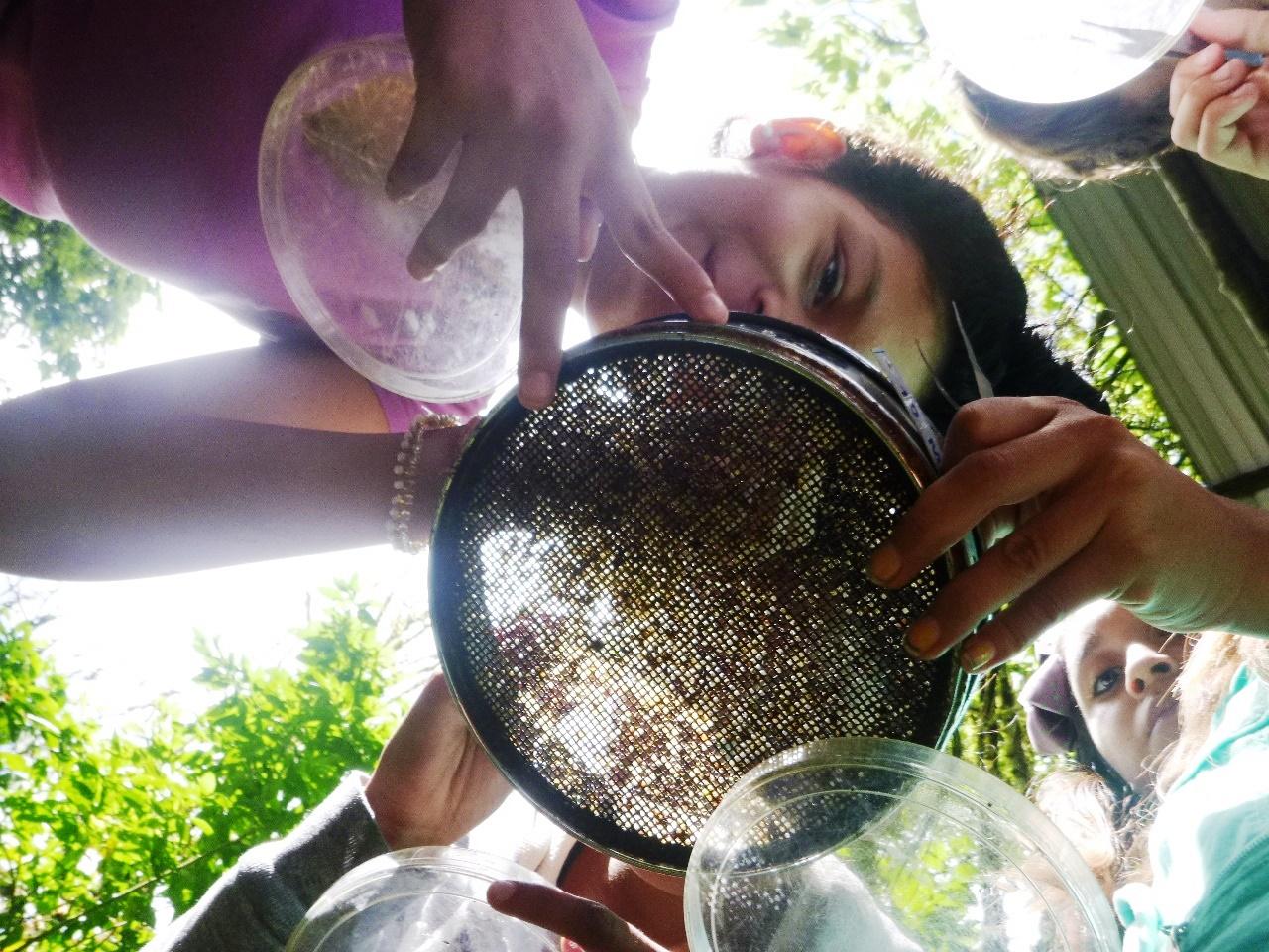 Figura 3 . Usando tamices y pinzas, los estudiantes logran separar e identificar las semillas ingeridas por las tortugas. Foto: archivo EPI