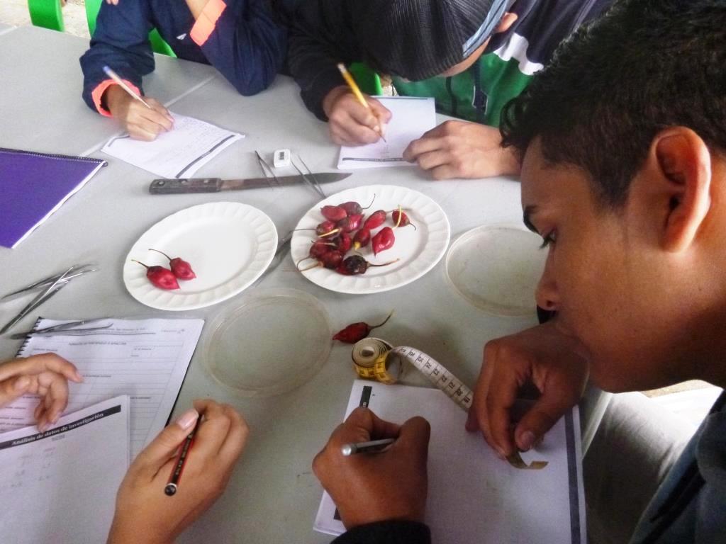 Figura 6 . Usando el método científico, un estudiante del Colegio Nacional Galápagos analiza los datos colectados para afirmar o rechazar su hipótesis. Foto: archivo EPI