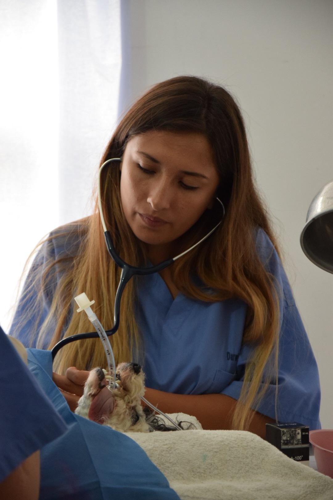 Figura 3 . Pasante Nathalya aprendiendo sobre el monitoreo de la anestesia. Foto: Darwin Animal Doctors