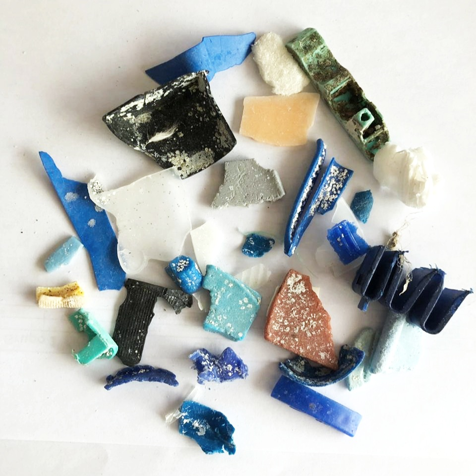 Figura 8 . Pequeños fragmentos desmenuzados de plástico con organismos fijados a ellos. Foto: Rosita Calderon