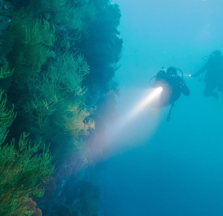 Figura 10 . Buzos disfrutando la pared de coral negro en Pinzón sin crear impactos. Foto: Nicolas Moity/Fundación Charles Darwin