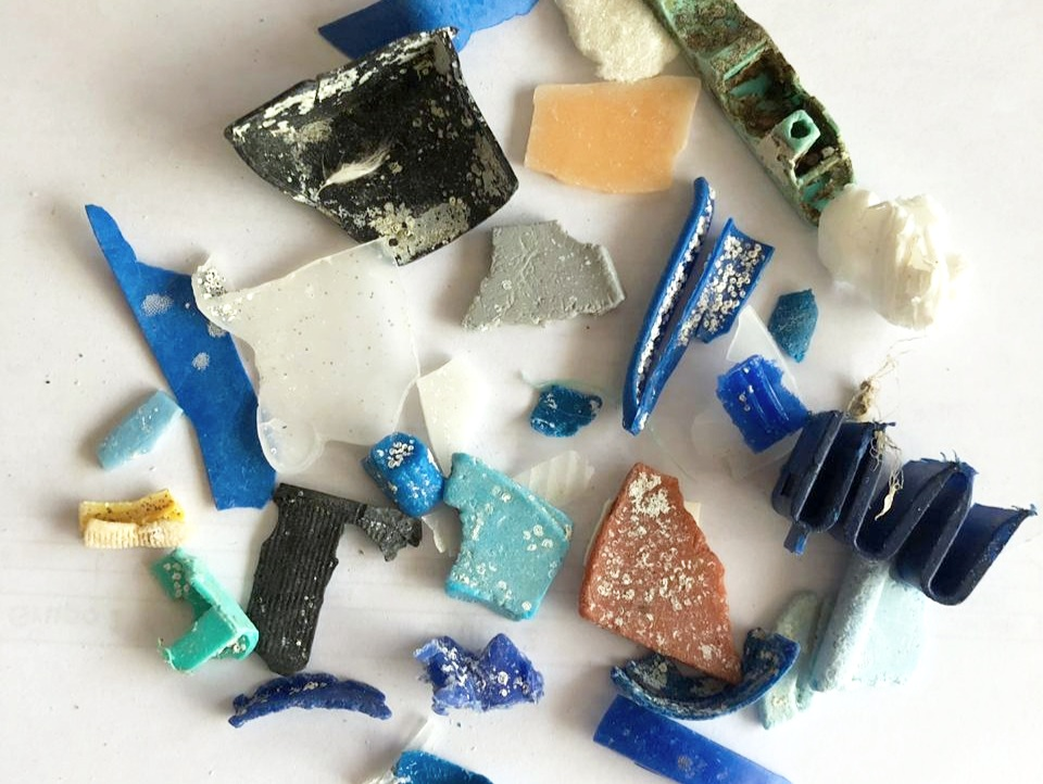 Figure 8 . Small fragments of broken plastic with organisms attached. Photo: Rosita Calderon