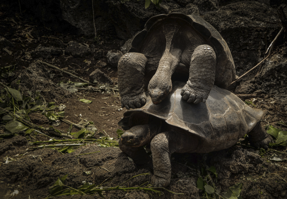 Figure 21 . Natural selection. Inside Galapagos 2015. Photo: Joshua Navarrete – Young Photographer