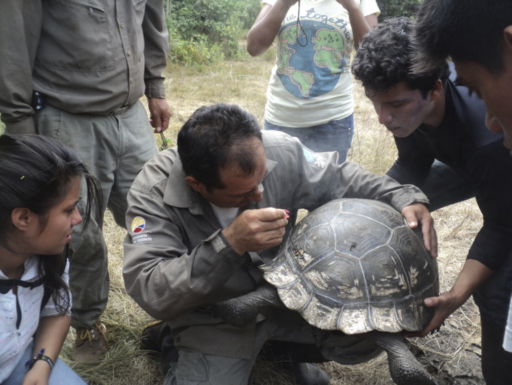 Figure 5 . Monitoring a giant tortoise is a unique and unforgettable experience for students. Photo: EPI Archive