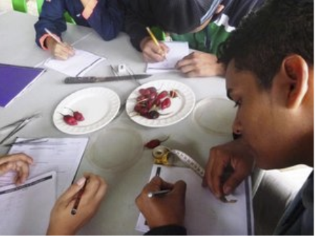 Figure 6 . Using the scientific method, a student from the Colegio Nacional Galápagos analyses data to affirm or reject his hypothesis. Photo: EPI Archive