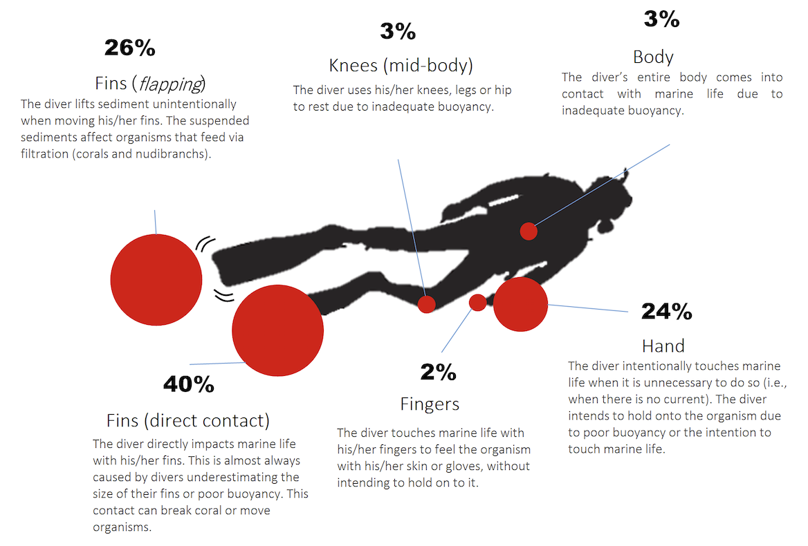 Figure 5.  What sort of contact do divers make with marine life and substrate? Percentages relative to the number of contacts by each part of the body and dive equipment. Source: Underwater monitoring by the DiveStat project.  Click to enlarge.