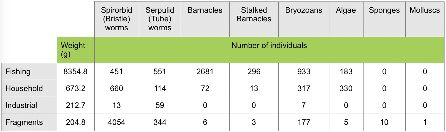 Table 1.  Weight in grams and numbers of organisms found on four categories of plastic debris.  Click to enlarge.