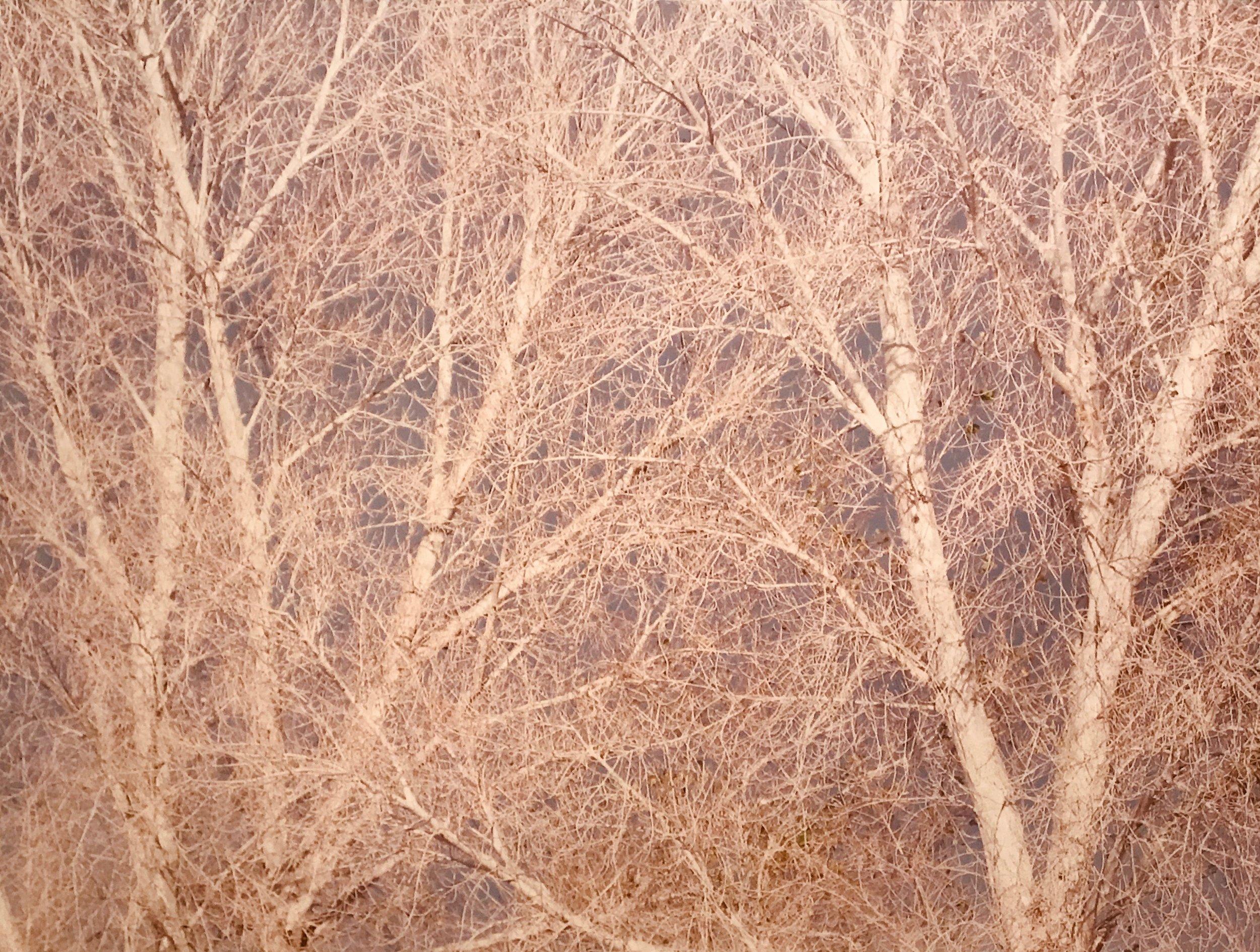 When the Air Softens, C-print Photograph