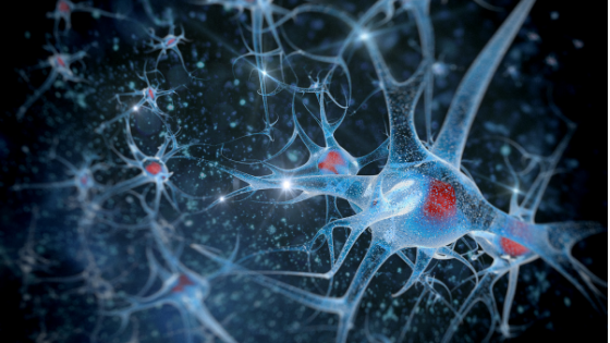#4 The Science of Mindfulness - Neurons the FIRE together WIRE together.