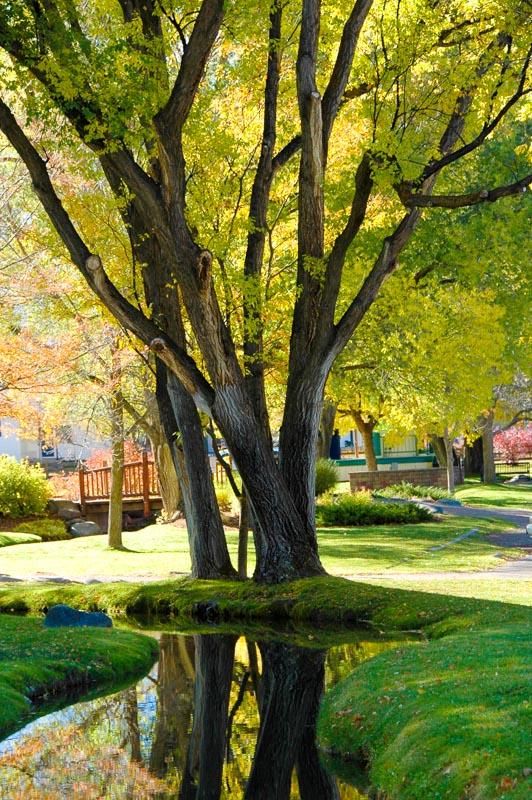Carbondale town park.JPG