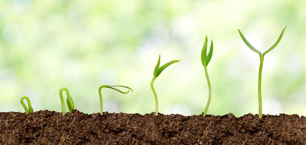 Seed-growing-process-Stock-Photo.jpg