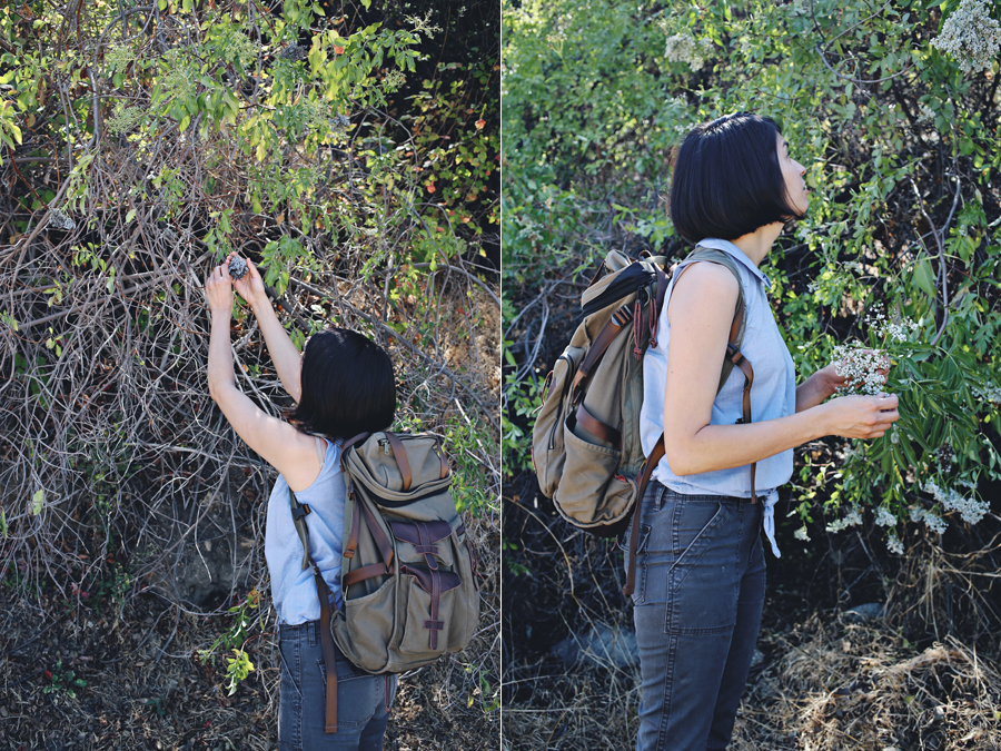 Foraging With Emily Han | Dine X Design