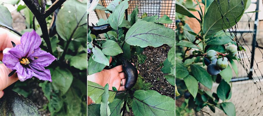 Purple-Garden-Haul-Dine-X-Design.jpg