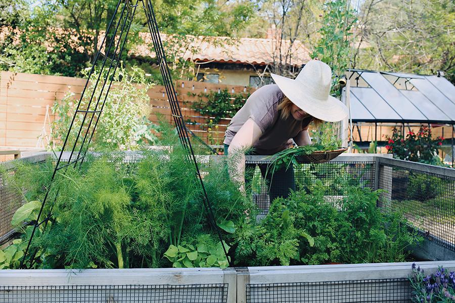04_Carrot Top Pesto Spiral Rolls Garden Harvest.jpg