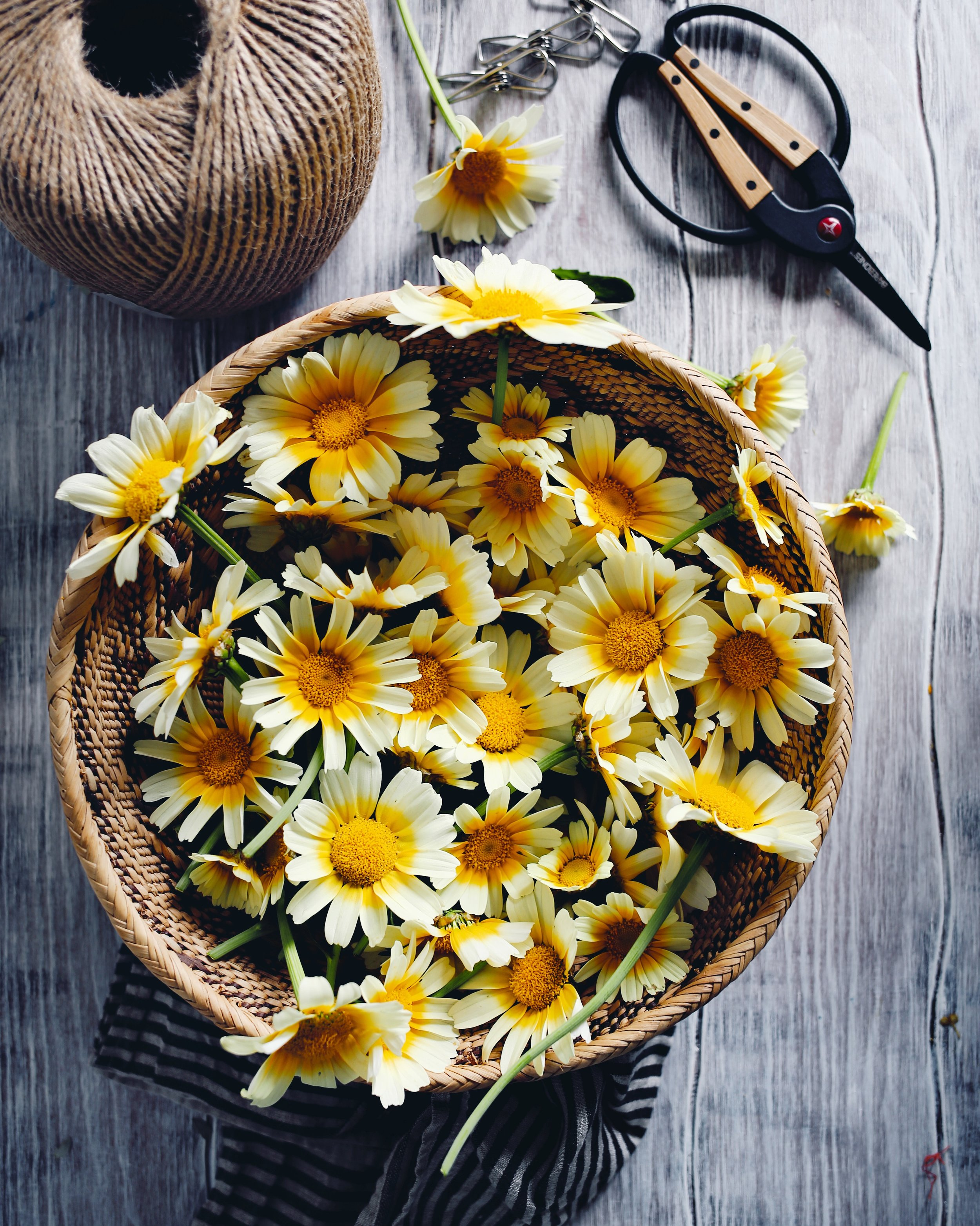 02__chrysanthemum syrup | Photo Credit Kristin Guy.jpg
