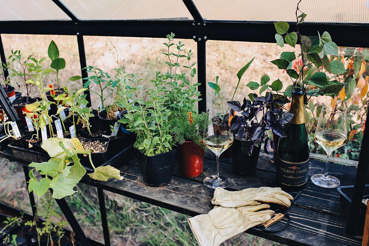 06_Plant Care Watering & Wine | Dine X Design.jpg