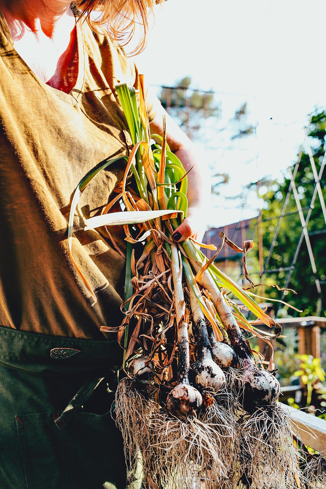 01_Dine X Design | Growing Garlic.jpg