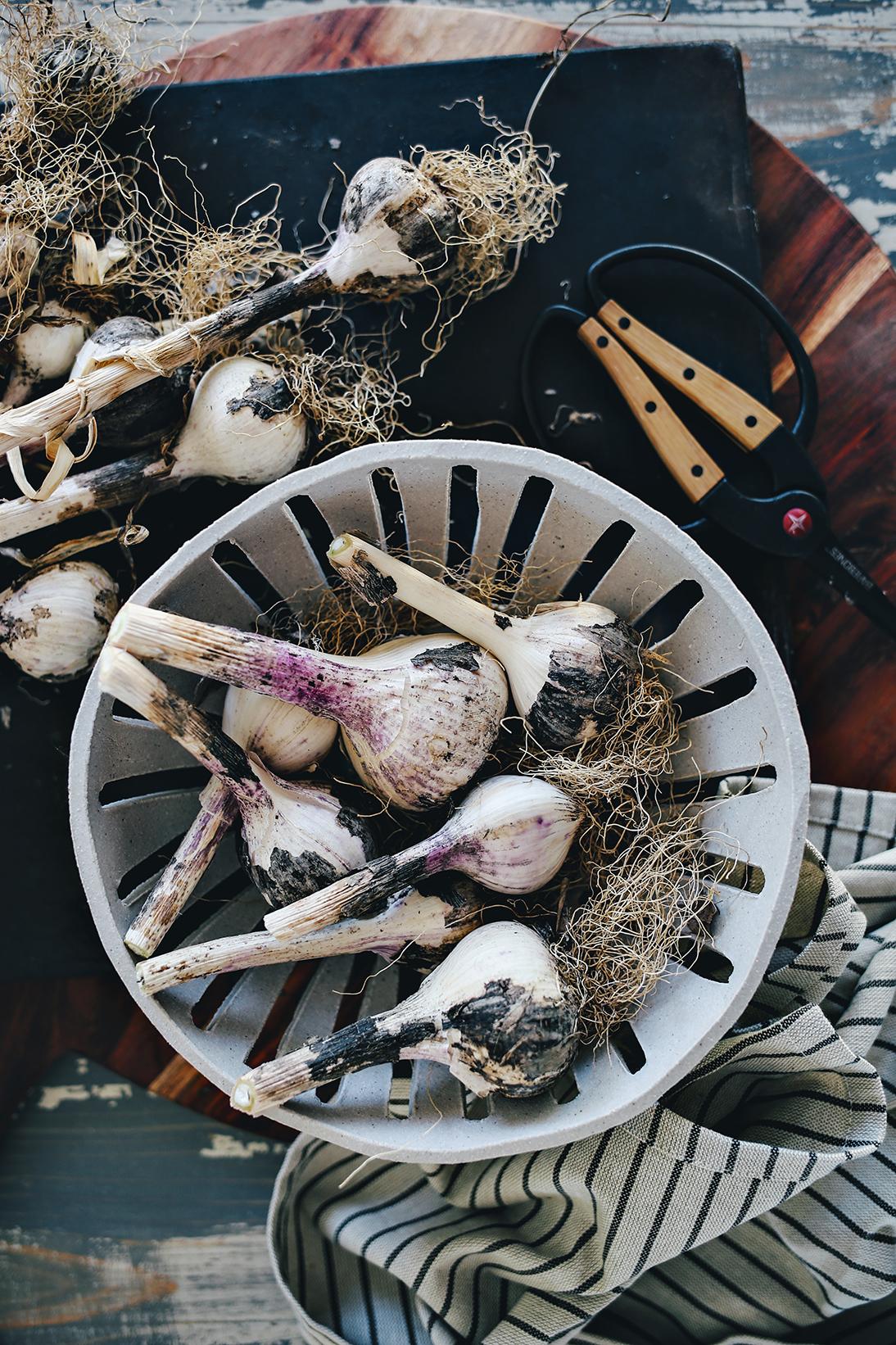 07_Dine X Design | Growing Garlic.jpg