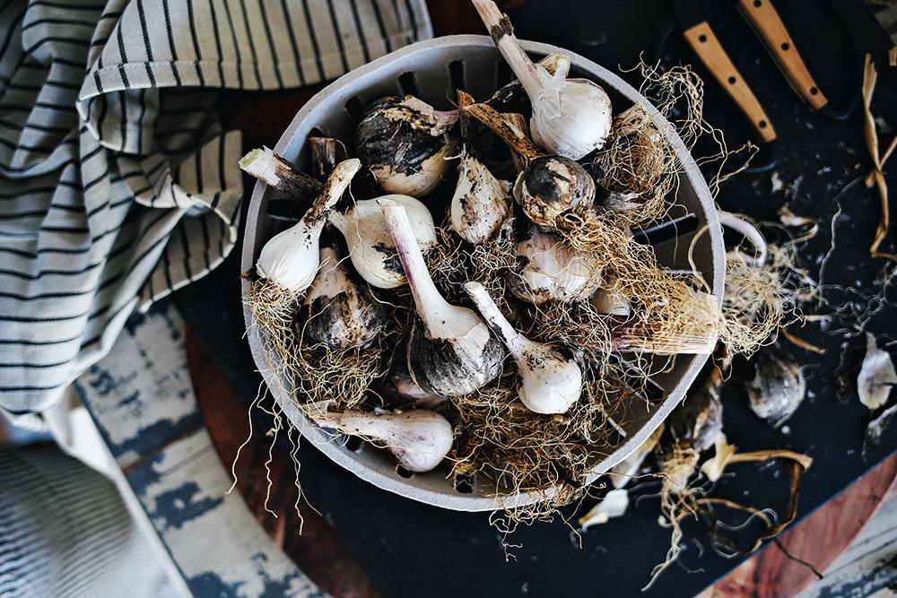 08_Dine X Design | Growing Garlic.jpg