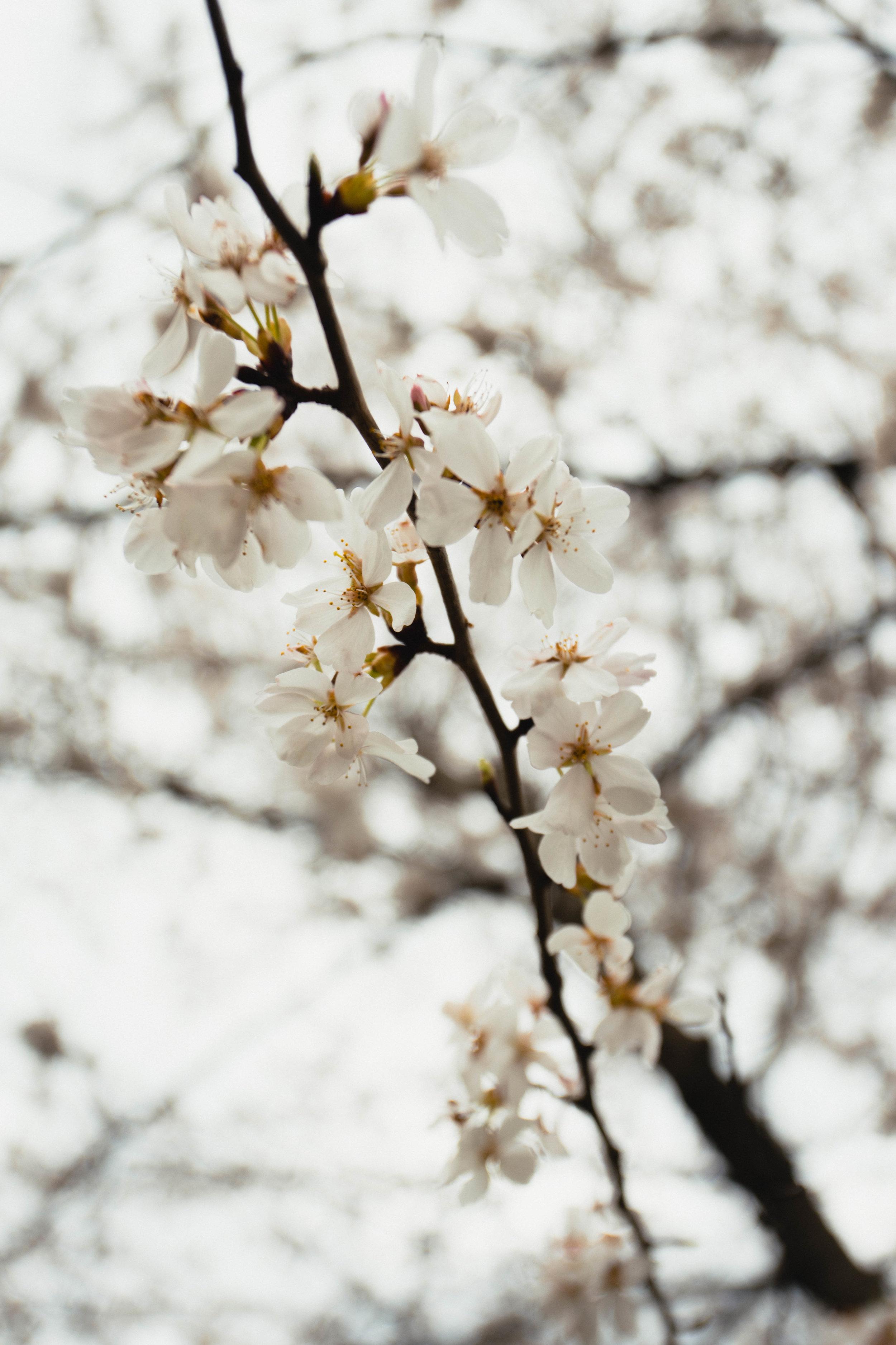 davidscotto flowers.jpg